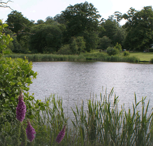 Chalybeate Springs Trout Fishery